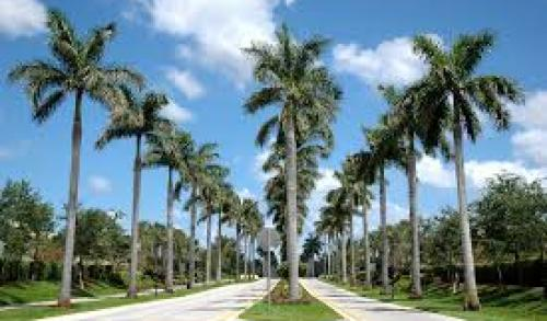 Pembroke Pines � Local and Long Distance Moving Companies